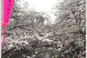 中目黒桜ライトアップ2018