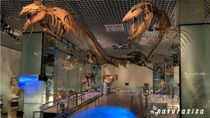 国立科学博物館-地球館-B2F