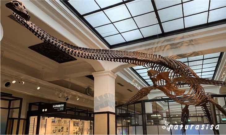 国立科学博物館-日本館