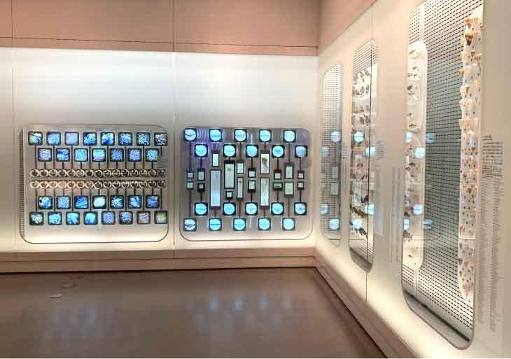 国立科学博物館-地球館1F